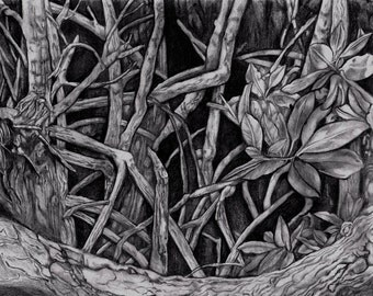 Mangrove II ~ Drawing by Dawn Rosendahl ~Original Pencil Drawing~