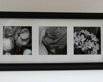 3 Set of black and white flower photos: Framed