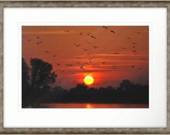 Evening Over Treetops Waterfowl at Sunset Framed Photographic Print