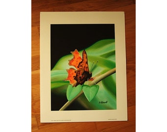 Print of Butterfly