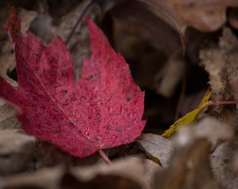 Autumn Leaves - Autumn Leaves Photo - Fall - Fall Photo - Nature Photo - Digital Photo - Digital Download - Instant Download - Wall Decor