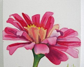 Original Pink Zinnia Painting 8x8
