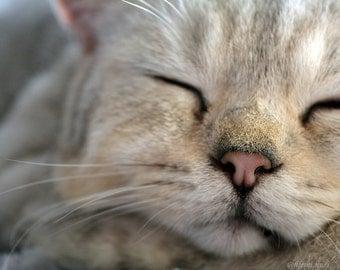 "Postcard ""sleeping cat"" relaxation greeting"