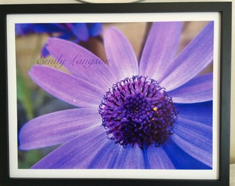 Purple daisy - flower photography - frame not included