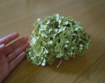 Natural dryed hydrangea