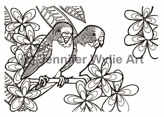 budgies bird coloring page colouring page coloring book printable adult coloring hand drawn colour therapy instant download print - Bird Coloring Book