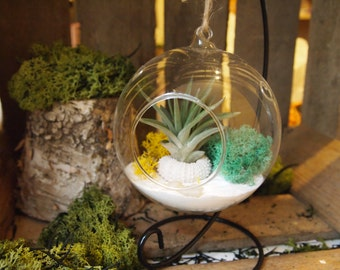 Air plant terrarium kit with urchin ; unique gift; tillandsia; air plant;terrarium;desk decor