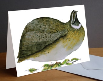 Quail bird fun greeting card