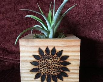 Wooden planter with air plant