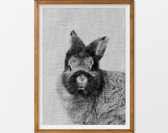 Rabbit Print Rabbit Photograph - Rabbit Photo, Rabbit Photography Rabbit Art Print Animal Wall Art
