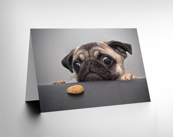Cute Pug Card / Dog Card / Animal Photography /  Pug Portrait / Pug Birthday Card / Dog Birthday Card / Greetings Card CL1019