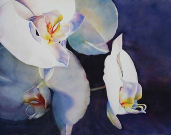 white orchids, floral giclee print of watercolor painting flowers