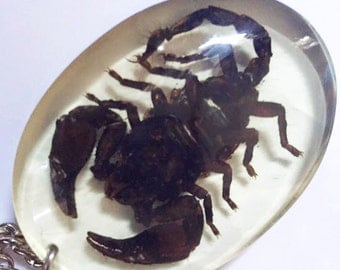 Scorpion Insect Keychain Keyring