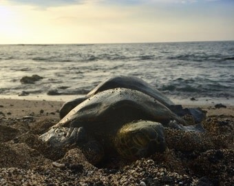Baby Turtle Photo