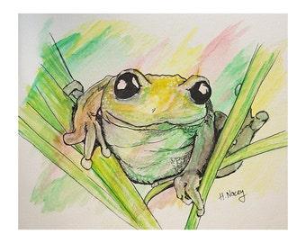 Mr Frog - watercolour & ink Print