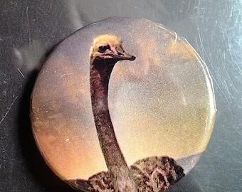 1 inch ostrich pin