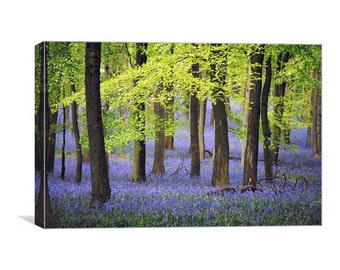 The Bluebell Wood Canvas Print