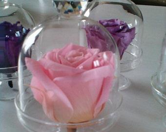 Small decorative bells