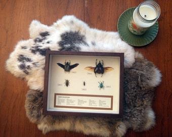 Order Coleoptera Display 1