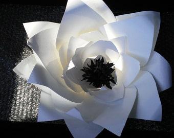 White Flower /Black Center