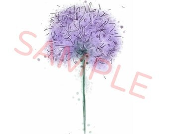 Allium - A4 print