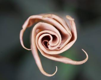 G8 - Spiral Flower Closer
