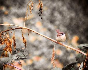 Wren Print, Fine Art Photography, Nature Photography
