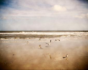 Beach Print, Fine Art Photography, Seagulls on the Ocean