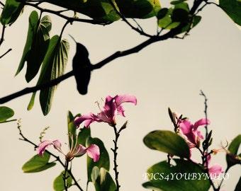 Hummingbird Silhouette Caribbean Sunset
