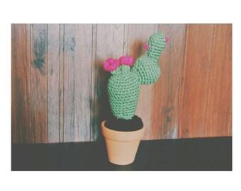 Nopal cactus bundle.