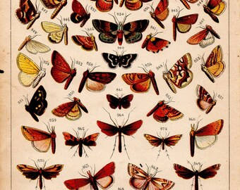 Vintage 1930's Colouful Butterfly Print