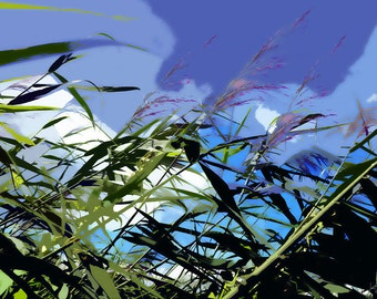 Grasses in the wind, photography, digital art, printing