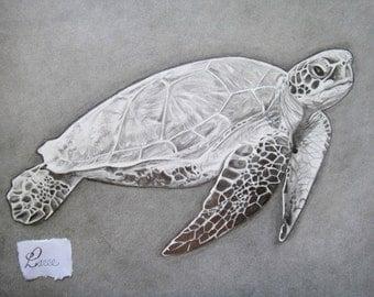 Sea Turtle Art Drawing Etsy