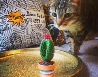 Mini Cactus Thérèse