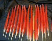 Scarlet Macaw Tail feathers, 17 long center tail, headdress accent feathers, red with some turquoise color