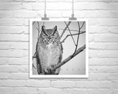 Owl Photography, Black and White, Owl Picture, Great Horned Owl, Owl Art, Bird Art, 8 x 8, 10 x 10, 12 x 12, Square Print, Square Art