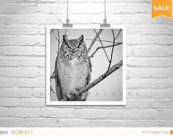 Sale 15% Owl Photography, Black and White, Owl Picture, Great Horned Owl, Owl Art, Bird Art, 8 x 8, 10 x 10, 12 x 12, Square Print, Square A