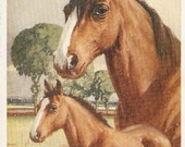 Horse postcards - Mare and foal horseshoe  Nice vintage English Greetings postcard, Published by J. Salmon, SevenOaks, artist Whydale