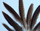 PHEASANT FEATHERS Loose  / Natural, not dyed  / 269