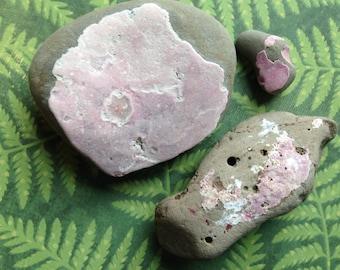 BASALT Stones With RED ALGAE/California Basalt Rocks/Pacific Ocean Rocks