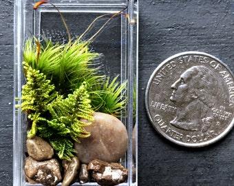 Miniature Terrarium Refrigerator Magnet with Live Moss Plants