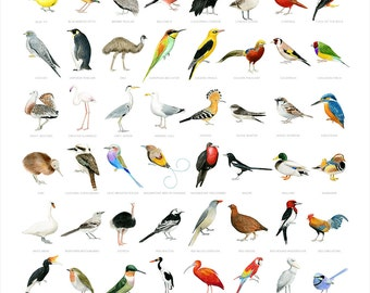 Birds of The World - Print