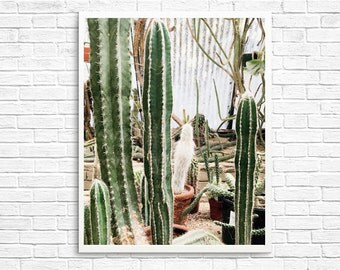 California Photography, Cactus Photography, Palm Springs Photography, Cactus Garden, Cactus, Green, Home Decor, Desert Photo - Cactus Love