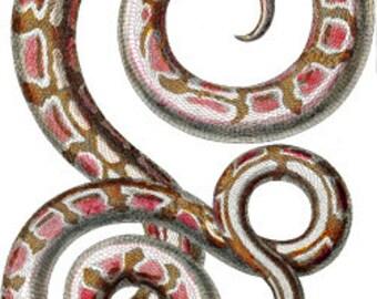 pink snake png file clip art Digital graphics animal reptile Images Download wildlife nature printable art