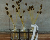 Natural arrangement, Pimentina in mini bottle carrier, beach, farmhouse, modern country