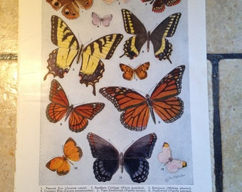 1947 American Butterflies and Moths Vintage Illustration