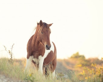 Horse on Beach Dune Photograph - 11x14 Color Horse Equine Photography Print