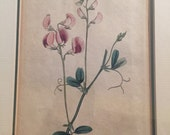 Beautiful framed old floral plate engraving 1790