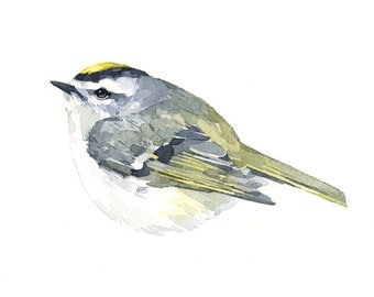Golden-crowned Kinglet Watercolor Print, Small Bird Painting
