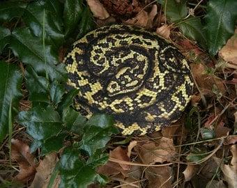 Carpet Python Snake - Hand Painted Rock Art - Realistic Garden Decor